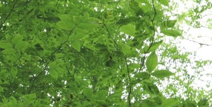 کشف یک درخت شجره نامه در چین
