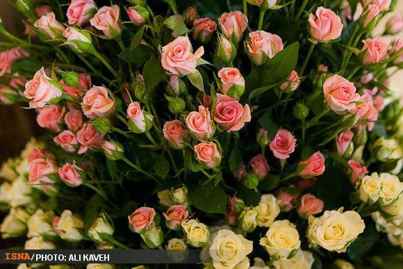 محبوبیت گل ایرانی در ویتنام