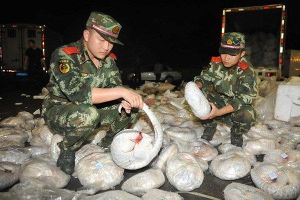 کشف بزرگترین محموله پوست پانگولین و عاج در ویتنام