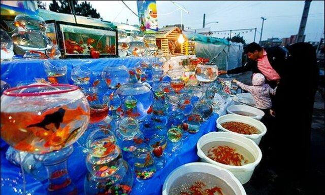 در شرایط فعلی از خرید ماهی قرمز خودداری کنید