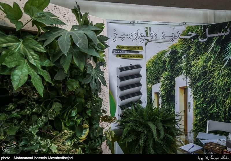 نکاتی برای مراقبت از گیاهان آپارتمانی