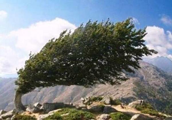 خبرنگاران وزش باد شدید در کرمان پیش بینی می شود