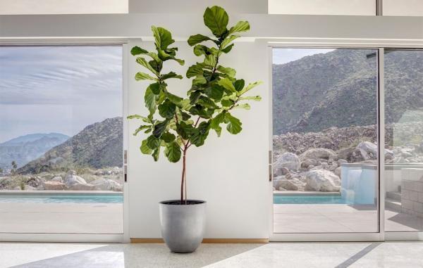 5 گل آپارتمانی غول پیکر برای خانه شما