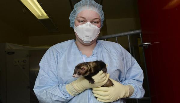 روسیه برای حیوانات واکسن کرونا ثبت کرد