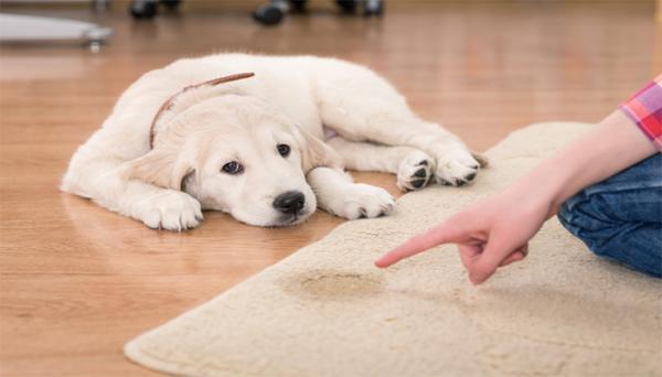 روش های از بین بردن بوی سگ در خانه