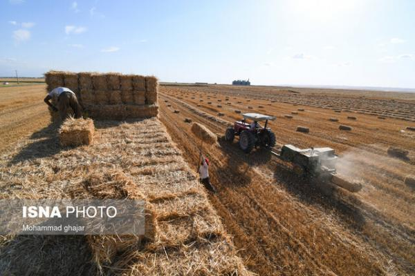 ورود 120 هزار تن گندم به قم تا انتها امسال